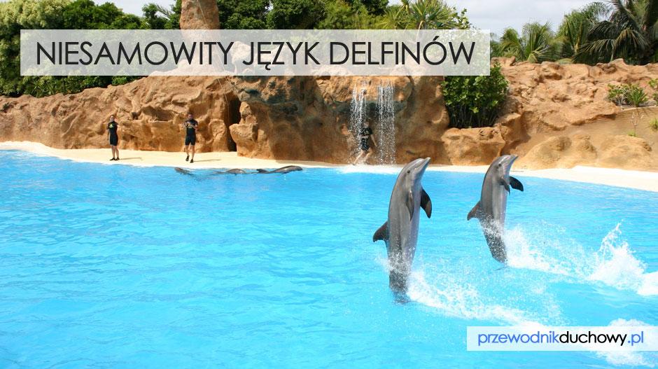 Niesamowity język delfinów