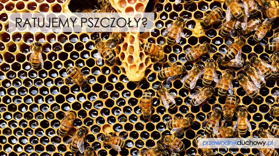 Ratujemy pszczoły?